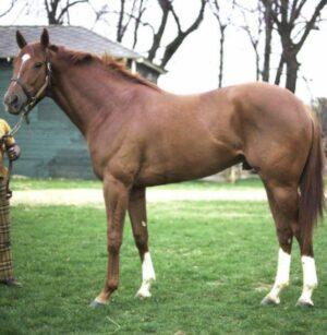 livejupiter 1627993875 23601 300x307 - 【画像】スヤスヤサリオスよりかわいい馬の画像はない説