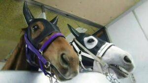 livejupiter 1627993875 3501 300x168 - 【画像】スヤスヤサリオスよりかわいい馬の画像はない説