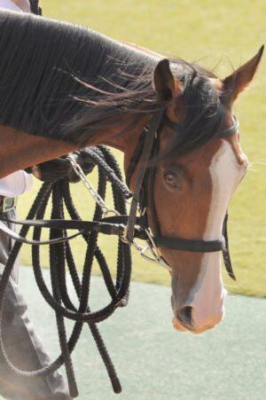 livejupiter 1627993875 3801 300x451 - 【画像】スヤスヤサリオスよりかわいい馬の画像はない説