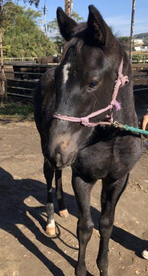 livejupiter 1627993875 4901 300x556 - 【画像】スヤスヤサリオスよりかわいい馬の画像はない説