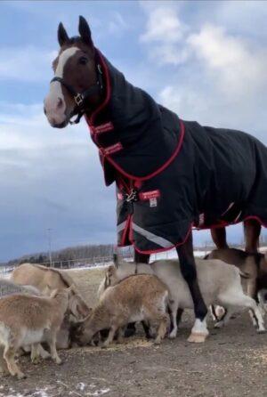 livejupiter 1627993875 5201 300x446 - 【画像】スヤスヤサリオスよりかわいい馬の画像はない説