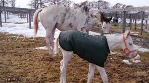 livejupiter 1627993875 6201 300x168 - 【画像】スヤスヤサリオスよりかわいい馬の画像はない説