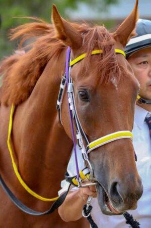 livejupiter 1627993875 6301 300x451 - 【画像】スヤスヤサリオスよりかわいい馬の画像はない説