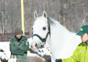 livejupiter 1627993875 6501 300x210 - 【画像】スヤスヤサリオスよりかわいい馬の画像はない説