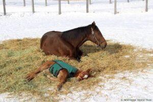livejupiter 1627993875 701 300x200 - 【画像】スヤスヤサリオスよりかわいい馬の画像はない説