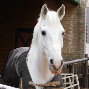 livejupiter 1627993875 8101 300x300 - 【画像】スヤスヤサリオスよりかわいい馬の画像はない説