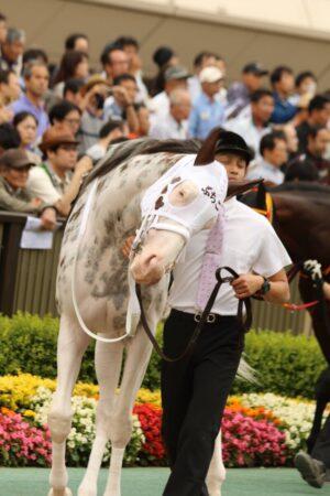 livejupiter 1629189181 1401 300x450 - 【競馬】ソダシ、須貝調教師のことが大好きだった