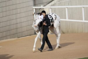 livejupiter 1629189181 1403 300x200 - 【競馬】ソダシ、須貝調教師のことが大好きだった