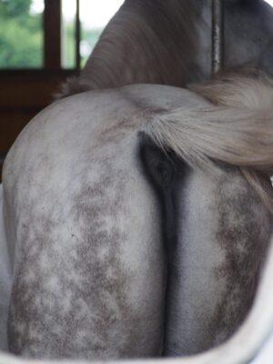 livejupiter 1629189181 19001 300x400 - 【白毛】シラユキヒメ一族【芦毛】