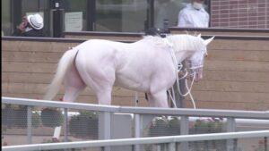 livejupiter 1629697500 20401 300x169 - 【血統】ソダシに中出ししても許される種牡馬