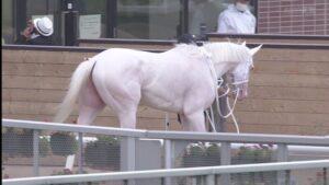 livejupiter 1629708524 6501 300x169 - 【競馬】冷静に考えて、キーンランドCのソダシの勝ち方強くね?