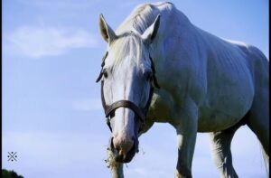 livejupiter 1629761316 25501 300x197 - 【競馬】ゴールドシップ、受胎率4年連続90%超え