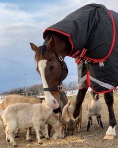 livejupiter 1629815741 10501 - 【画像】テーオーコンドルとローマンネイチャーより面白い馬の画像ってあるの?
