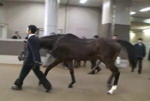 livejupiter 1629815741 11701 300x203 - 【画像】テーオーコンドルとローマンネイチャーより面白い馬の画像ってあるの?