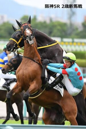 livejupiter 1629815741 301 300x450 - 【画像】テーオーコンドルとローマンネイチャーより面白い馬の画像ってあるの?