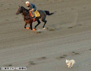 livejupiter 1629815741 3901 300x233 - 【画像】テーオーコンドルとローマンネイチャーより面白い馬の画像ってあるの?