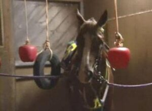 livejupiter 1629815741 4701 300x219 - 【画像】テーオーコンドルとローマンネイチャーより面白い馬の画像ってあるの?