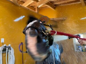 livejupiter 1629815741 501 300x225 - 【画像】テーオーコンドルとローマンネイチャーより面白い馬の画像ってあるの?