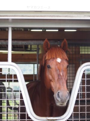 livejupiter 1629815741 5201 300x400 - 【画像】テーオーコンドルとローマンネイチャーより面白い馬の画像ってあるの?