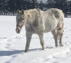 livejupiter 1629815741 5301 300x267 - 【画像】テーオーコンドルとローマンネイチャーより面白い馬の画像ってあるの?