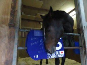 livejupiter 1629815741 5402 300x225 - 【画像】テーオーコンドルとローマンネイチャーより面白い馬の画像ってあるの?