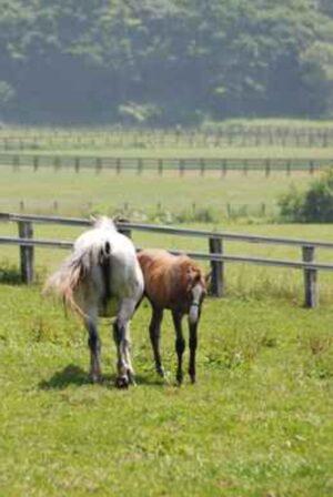 livejupiter 1629815741 5701 300x448 - 【画像】テーオーコンドルとローマンネイチャーより面白い馬の画像ってあるの?