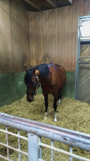 livejupiter 1629815741 6201 300x533 - 【画像】テーオーコンドルとローマンネイチャーより面白い馬の画像ってあるの?
