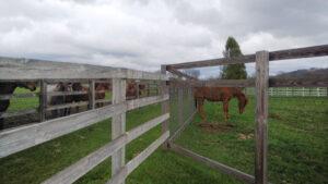 livejupiter 1629815741 6601 300x169 - 【画像】テーオーコンドルとローマンネイチャーより面白い馬の画像ってあるの?