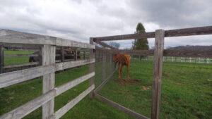 livejupiter 1629815741 6602 300x169 - 【画像】テーオーコンドルとローマンネイチャーより面白い馬の画像ってあるの?