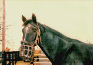 livejupiter 1629815741 6701 300x209 - 【画像】テーオーコンドルとローマンネイチャーより面白い馬の画像ってあるの?