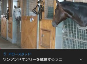 livejupiter 1629815741 7001 300x222 - 【画像】テーオーコンドルとローマンネイチャーより面白い馬の画像ってあるの?