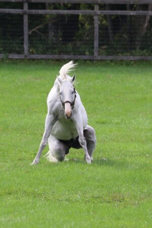 livejupiter 1629815741 901 300x450 - 【画像】テーオーコンドルとローマンネイチャーより面白い馬の画像ってあるの?