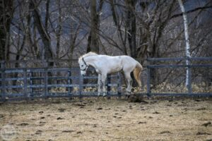 livejupiter 1629815741 902 300x200 - 【画像】テーオーコンドルとローマンネイチャーより面白い馬の画像ってあるの?