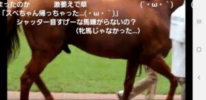 livejupiter 1629815741 9204 300x146 - 【画像】テーオーコンドルとローマンネイチャーより面白い馬の画像ってあるの?