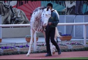 livejupiter 1630219710 25303 300x204 - 【競馬】メイケイエール、キーンランドCで急成長を遂げる