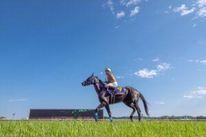 livejupiter 1633873006 47001 300x200 - 【競馬】2021年のベスト画像、京都大賞典のマカヒキに決まる