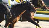 category racehorse 160x90 - 【競馬】メイケイエールちゃん、調教再審査受けるだけでテロ予告呼ばわりされてしまう